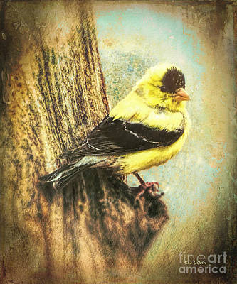Digital Art - The Exquisite Goldfinch by Tina LeCour