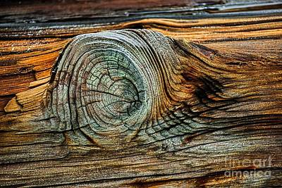 Sarasota Artist Photograph - The Eye In The Wood by Norman Gabitzsch