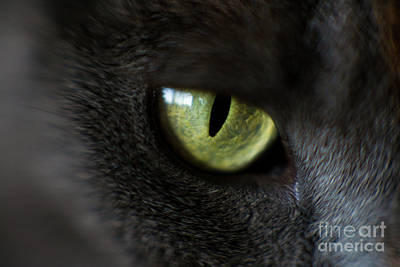 Photograph - The Eye by Mike Reid