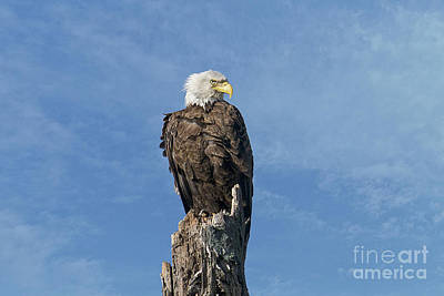 Photograph - The Eye Of Freedom by Craig Leaper