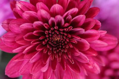 The Eye Of Pink Flower Art Print
