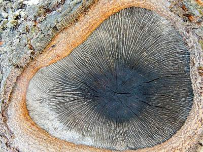 Photograph - The Eye Of The Tree by Denise Clark