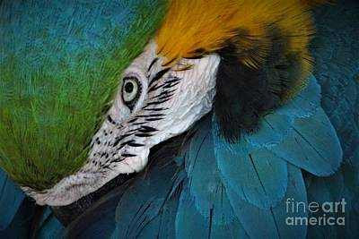 The Eyes Have It Art Print by Paulette Thomas