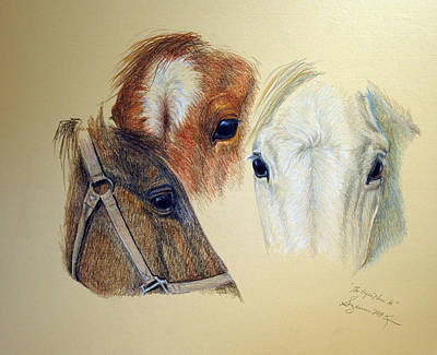 Drawing - The Eyes Have It by Suzanne McKee