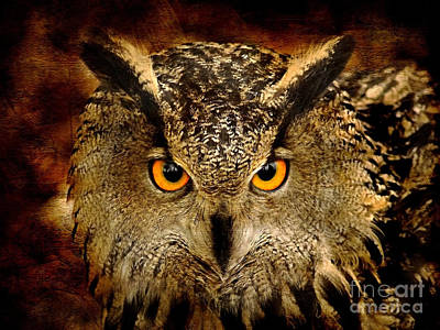 Birds Royalty-Free and Rights-Managed Images - The Eyes by Jacky Gerritsen