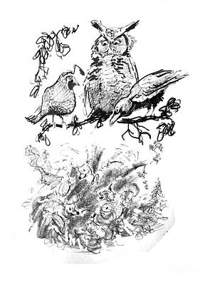 Great Horned Owl Drawing - The Fable by Paul Miller