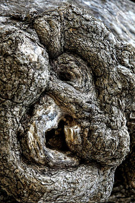 Digital Art - The Face In The Old Tree by John Haldane
