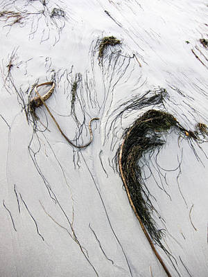 Photograph - The Face Of Seaweed by Mary Lee Dereske
