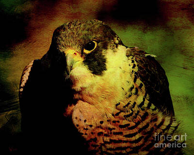 Hawk Birds Digital Art - The Falcon by Wingsdomain Art and Photography