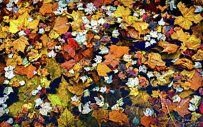 Photograph - The Fall Collection by Brian Wallace