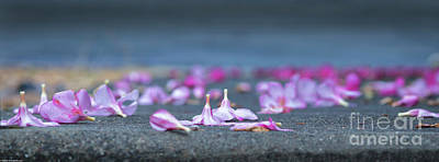 Photograph - The Fall Of Spring by Mitch Shindelbower