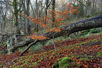 Photograph - The Fallen And The New In The Winter Wood by Glen Sumner