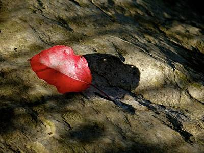 Photograph - The Fallen Leaf by Jenny Regan