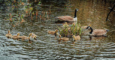 Photograph - The Family Of Gooses 2 by Lilia D