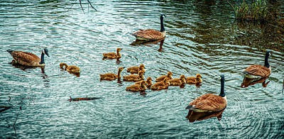 Photograph - The Family Of Gooses by Lilia D