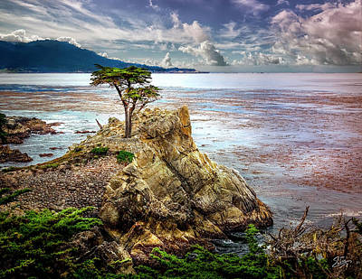 Photograph - The Famous Monterey Cypress Tree by Endre Balogh