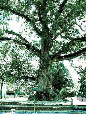Photograph - The Famous Old Wye Oak Tree by Merton Allen
