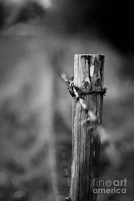 Photograph - The Fance  by Gary Bridger