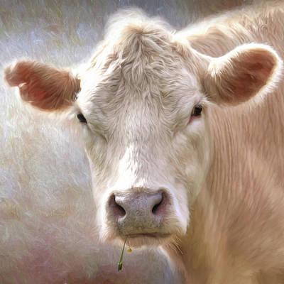 The Farmer's White Cow Art Print