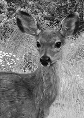 Photograph - The Fawn Bw by I'ina Van Lawick