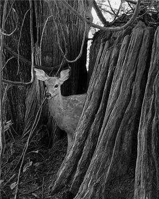 Photograph - The Fawn's Twin by I'ina Van Lawick