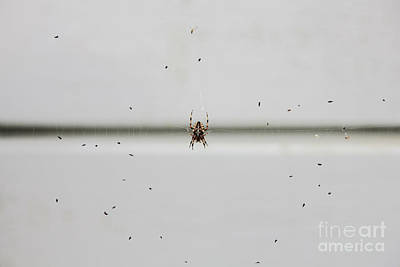 Spider Photograph - The Feast by Sverre Andreas Fekjan