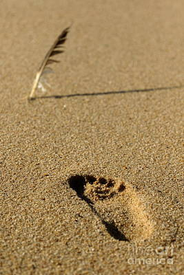 Photograph - The Feather And The Footprint by Howard Ferrier