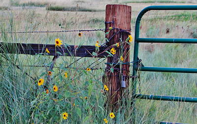 Photograph - The Fence by Marilyn Diaz