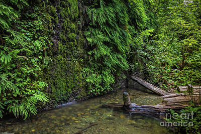 Photograph - The Fern Valley by Mitch Shindelbower