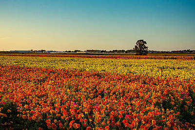 Photograph - The Field Of Flowers by Mark Perelmuter
