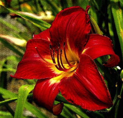Photograph - The Fiery Lily by James C Thomas