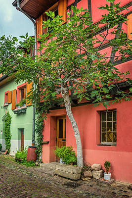Photograph - The Fig Tree And Eguisheim House Alsace_dsc7451_16 by Greg Kluempers