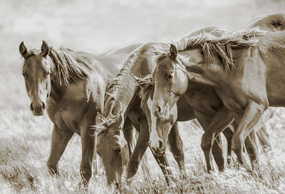 Photograph - The Fillies by Jennie Marie Schell