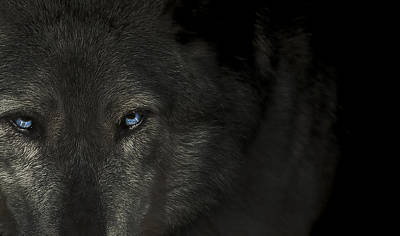 Wolves Photograph - The Final Hour  by Paul Neville