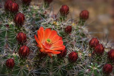 Photograph - The First Bloom  by Saija Lehtonen