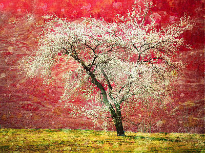 The First Blossoms Print by Tara Turner