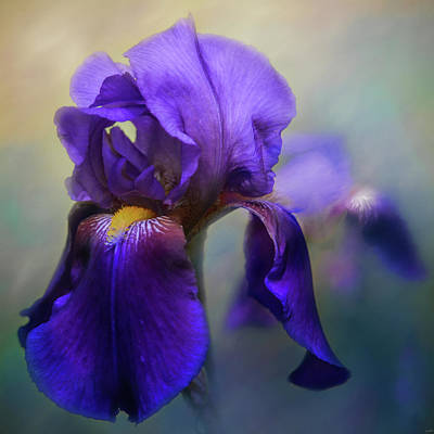 Photograph - The First Iris by Jai Johnson