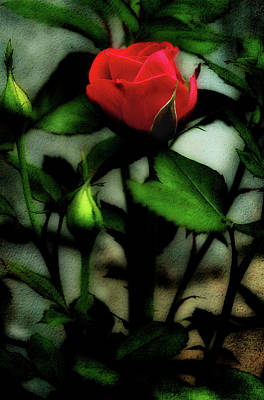 Photograph - The First Rose by Mike Eingle