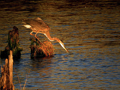 Photograph - The Fisherman by Jacqueline  DiAnne Wasson