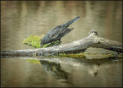 America Photograph - The Fishing Raven by LeeAnn McLaneGoetz McLaneGoetzStudioLLCcom