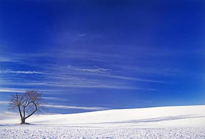 Photograph - The Flack Farm Tree by Doug Davidson