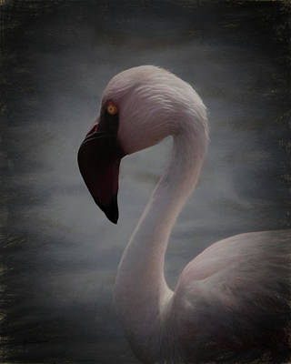 Digital Art - The Flamingo by Ernie Echols