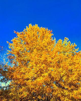 Photograph - The Flare Of Fall On A Clear Day by Michael Oceanofwisdom Bidwell