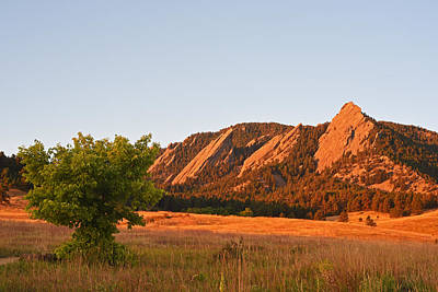 Photograph - The Flatirons Boulder Colorado From Chautauqua Park Tree by Toby McGuire
