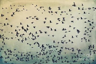 Flock Of Bird Digital Art - The Flight by Angela Doelling AD DESIGN Photo and PhotoArt