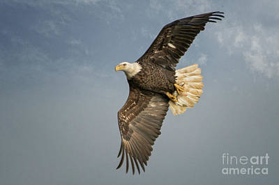 Photograph - The Flight by Craig Leaper