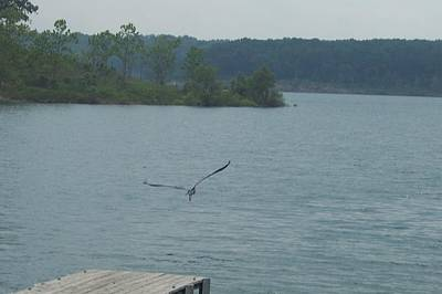 Jessica Sanders Photograph - The Flight Of A Blue Heron by Jessica Sanders