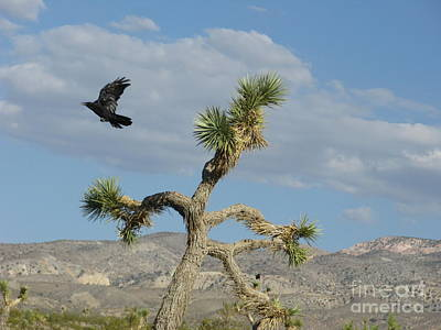 Print featuring the photograph The Flight Of Raven. Lucerne Valley. by Ausra Huntington nee Paulauskaite