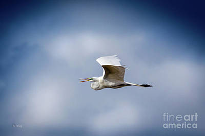 Photograph - The Flight Of The Great Egret by Rene Triay Photography
