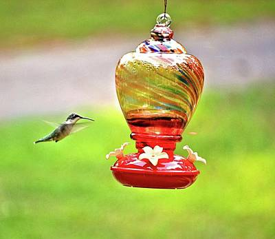 Photograph - The Flight Of The Hummingbird by James Potts